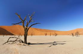 Desert Rumi 2